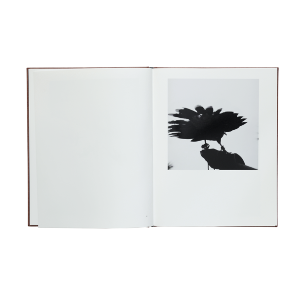 Graciela Iturbide - Des Oiseaux 03