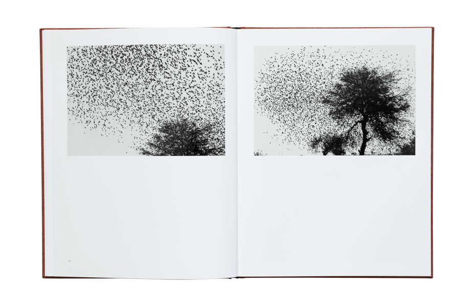 Graciela Iturbide - Des Oiseaux 06