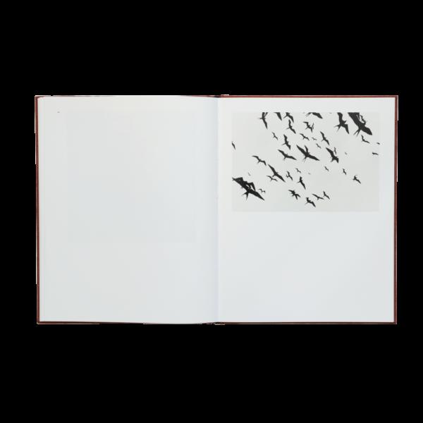 Graciela Iturbide - Des Oiseaux 08